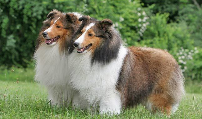 Irrestible Dog Ideas and Training Tips